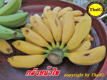 ผล กล้วย น้ำไทย