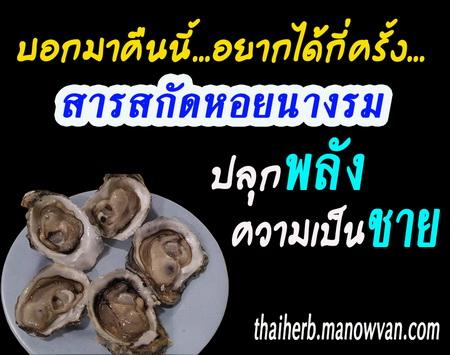 หอยนางรม เพิ่มพลังทางเพศ